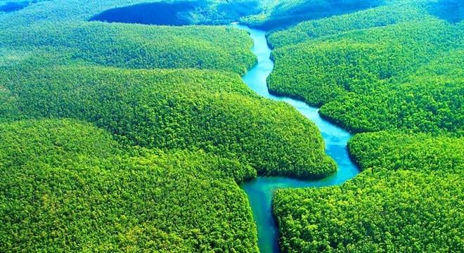 Construções verdes ao redor do mundo podem ajudar a proteger a Amazônia